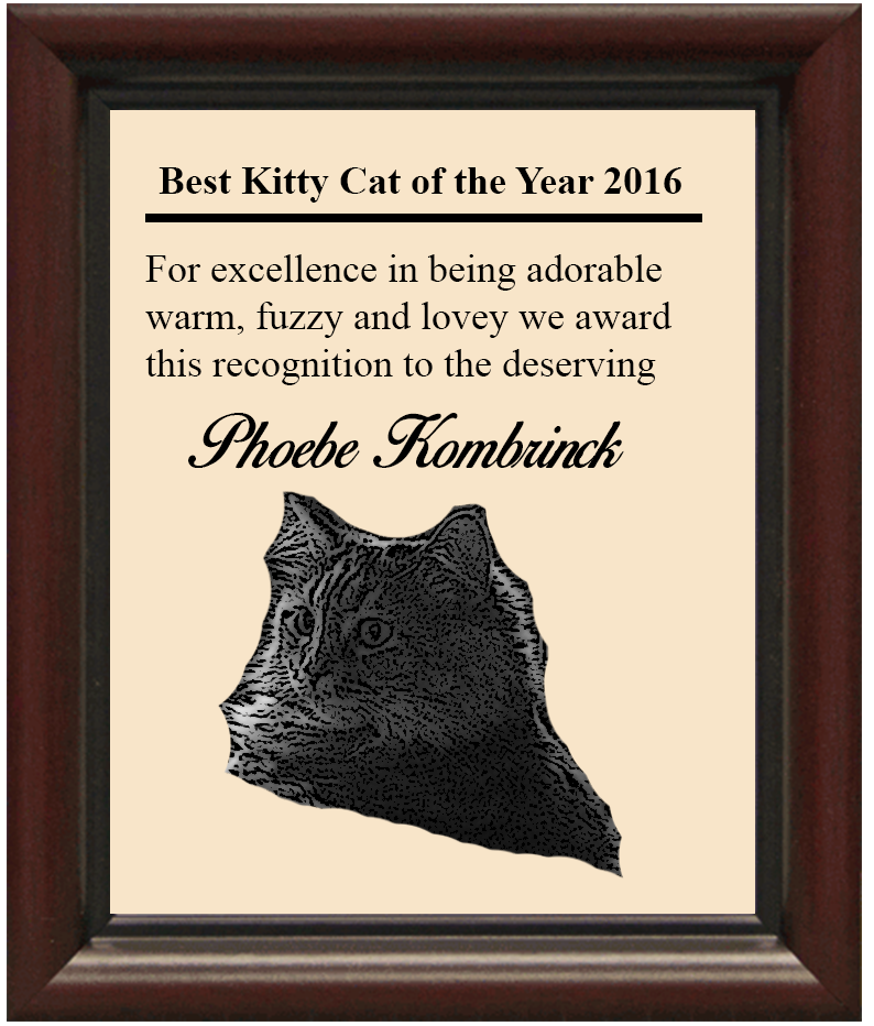 Best Kitty Cat 2016