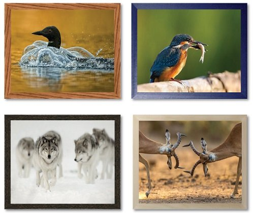 Wildlife Photography - Architect Picture Frame